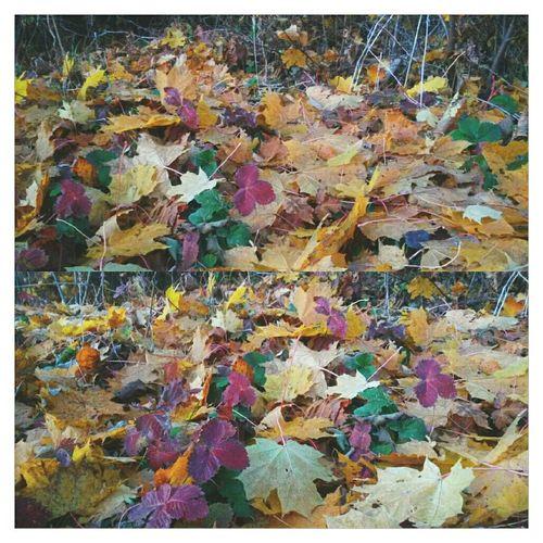 VSCO Autumn Fall осень EyeEm краски осени Autumn Colors