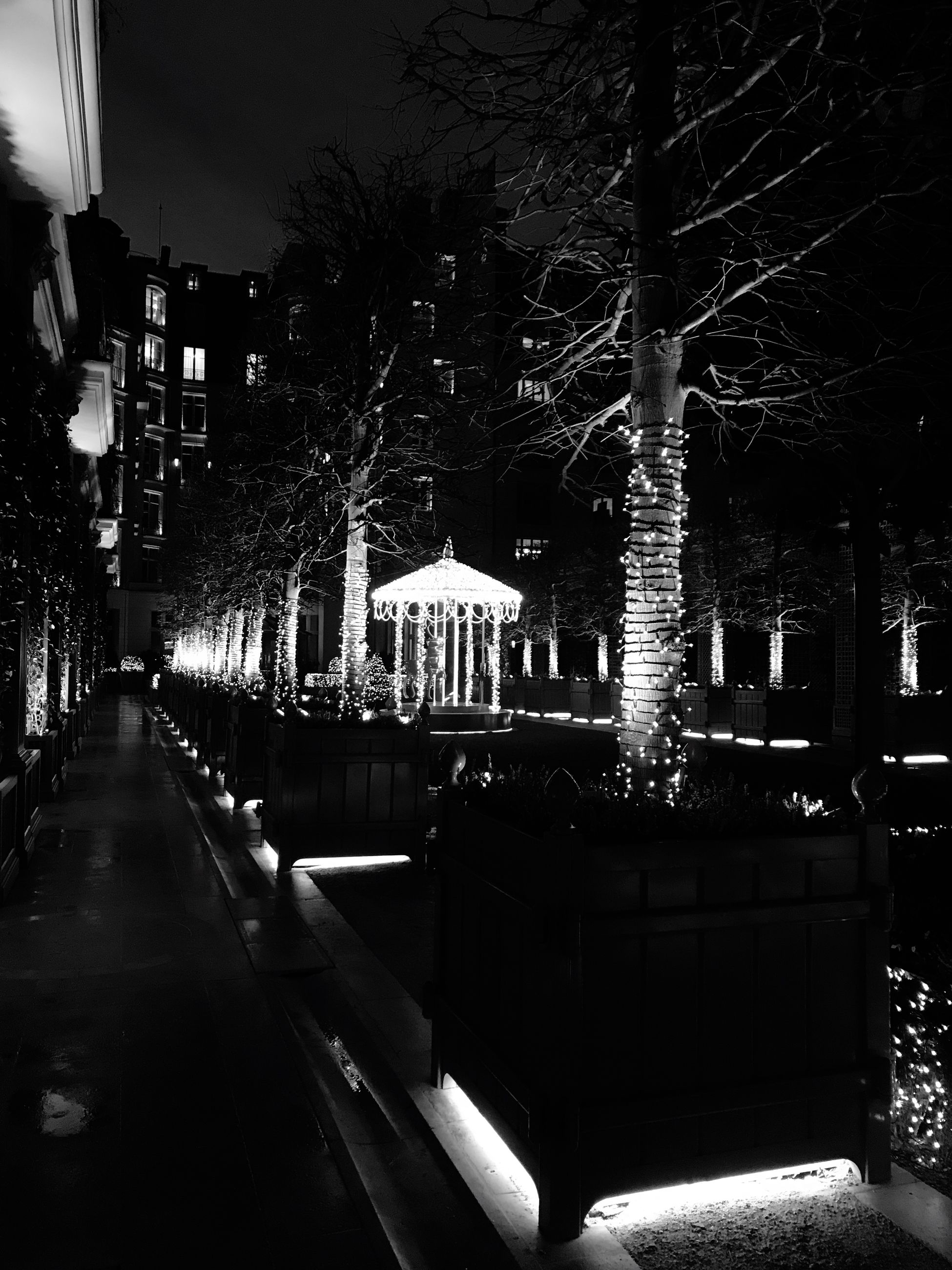 building exterior, tree, night, architecture, built structure, illuminated, outdoors, city, bare tree, no people, sky, nature