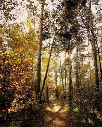 En la Heide holandesa Brummsumsheide Wald Bosque Netherlands Autum Otoño Naturalove Naturalovers