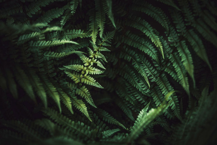 Nature Textured  Backgrounds Beauty In Nature Beauty In Nature Close-up Day Fern Focus On Foreground Fragility Full Frame Green Color Growth Leaf Leaves Macro Natural Pattern Nature No People Outdoors Pattern Plant Plant Part Selective Focus Wallpaper