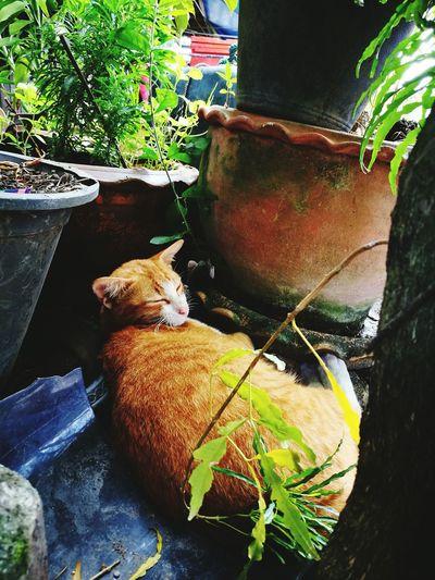 เมี้ยวววว Cat Cat♡ Cats 🐱 Cat Photography Taking Photos Day Animal Themes Pets One Animal Orenge แมว แมวหลับจ้าสบายเลยนะมึง แมวขี้เกียจ HuaweiP9Photography HuaweiP9