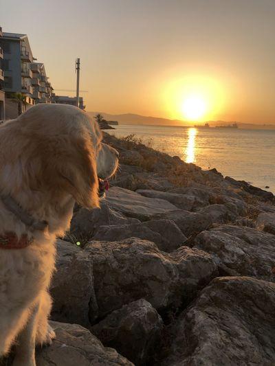 Luna at sunset