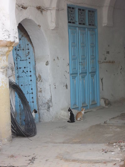 Chats of cats. Abandoned Alley Animal Themes Cats Chat Doors No People Tunisia Chats Animals Dialogues Street Life
