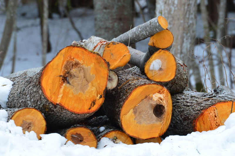 Pumpkins on wooden log in snow