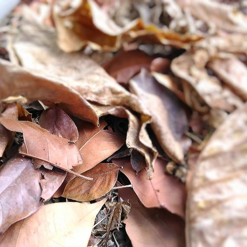 Leaves 🍁 My Attempt To Photography EyeEm Blur Dry Leaves