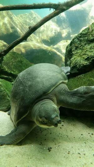 Beautiful Sea Cactus Turtle Fish Animal Water Tortoise Creature