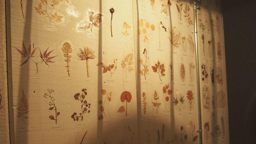 Cafe Wall Art Wall Wallart Flawer Flawers Dry Flower  Flawercollection Vintage Antique Vintage Art Retro Art Plassed Flawer Leaf Dryleaf SmallFlowers Small Flowers