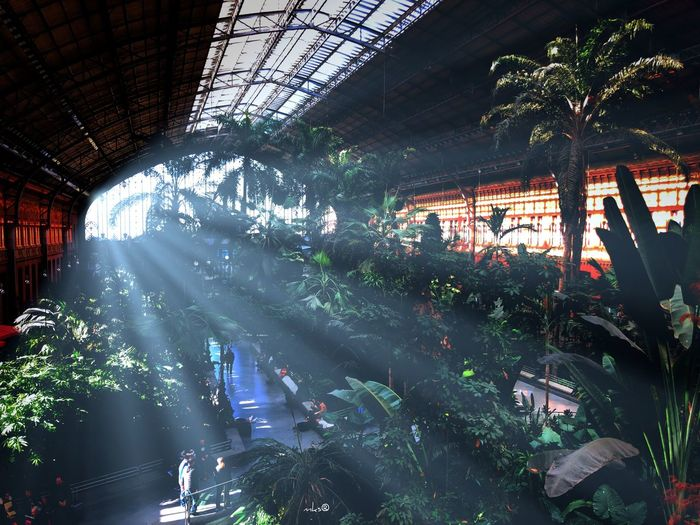 Sunflare Station EyeEm Best Shots Beauty In Nature Beautiful Sun City Architecture Indoors  Day Illuminated Architecture No People Tree Nature