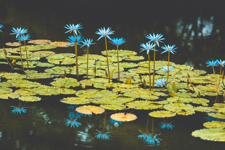 View of flowering plants by pond at night