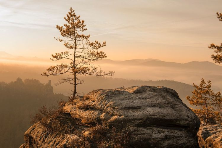 Travel Destinations Travel Sächsische Schweiz Saxon Switzerland Bastei New Perspectives Early Morning Hiking Hiking Adventures Misty Mountains  Misty Morning Sunrise Nature Tree Beauty In Nature Mountain Landscape Scenics Fog Sublime Living Rock - Object Sunlight The Great Outdoors - 2017 EyeEm Awards Breathing Space