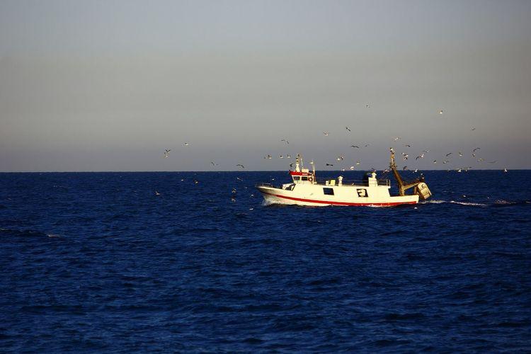 Seagulls Sea Nature Coming Back Skyline Fishing Boat Mojacar Mojacar