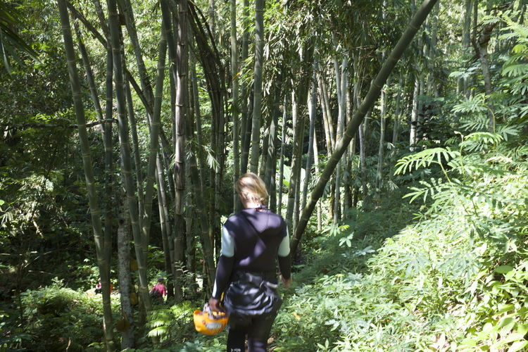 entering the bamboo jungle realm Adventure ASIA Bali Bamboo Green Color INDONESIA Jungle Landscape Leisure Activity Lifestyles Motion Nature One Person Path Real People Sublime Living Tranquility Travel Photography Tree Trekking Wanderlust WoodLand