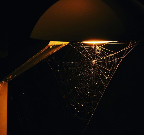 Spider web Marijampolė EyeEm Selects Naturephotography Autumn Illuminated Black Background Close-up Spider Web Spider Arachnid Insect Geometric Shape