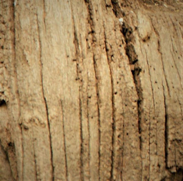 Backgrounds Brown Close-up Day Full Frame Nature No People Old Outdoors Pattern Plant Plant Bark Rough Selective Focus Textured  Textured Effect Tree Tree Trunk Trunk Weathered Wood - Material Wood Grain