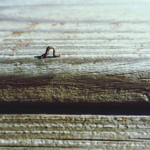 Inchworm Cute Nature Wood