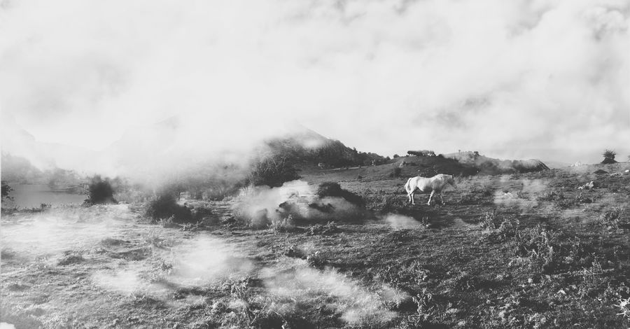 Mystic Mystical Magic Magical Livestock Domestic Animals Horse Cloud Fog Foggy Cloudy Animal Themes Nature Landscape Sky Whimsical Fairytale  No People Mist Outdoors Beauty In Nature Fantasy Unicorn Mystery Vintage