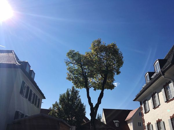 Nature In The City Tree In The City Tree Bavaria Bad Tölz Architecture City Bavarian City Bavarian Architecture