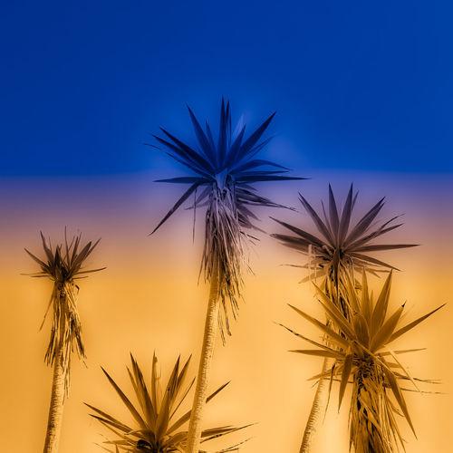 Spiky Skies The