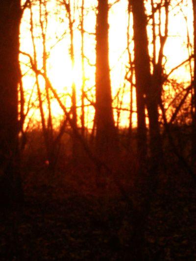 Sundown Forest Light And Shadow