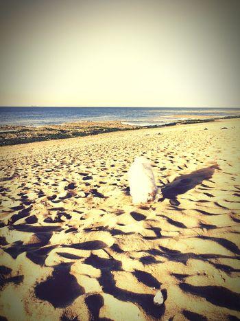 Myprincess🐶🐶 Isis😍 Ilovemydog Plage 🌴 Ile D'Oleron Holidays ☀ Chill Hello Sunshine Relaxing Time