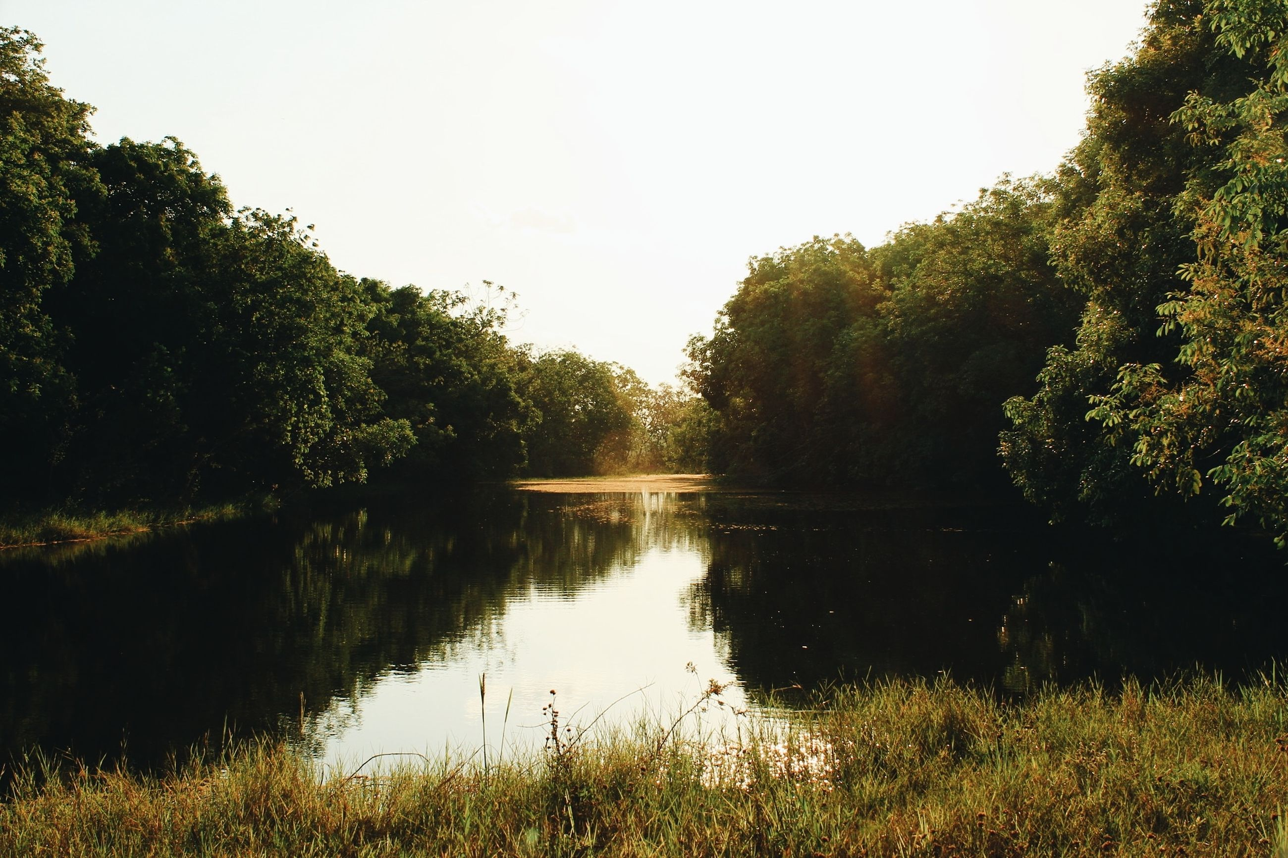 tree, plant, lake, reflection, tranquility, tranquil scene, water, sky, beauty in nature, nature, scenics - nature, grass, growth, no people, green color, day, clear sky, idyllic, outdoors