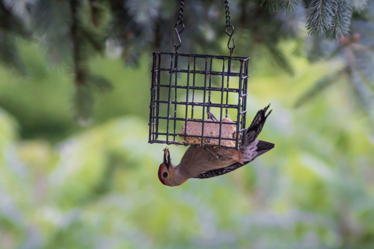 Close-up of a bird feeder