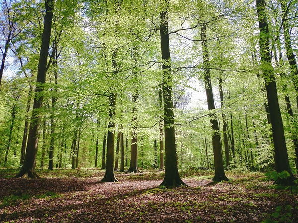 Beauty In Nature Day Forest Green Color Growth Hike Low Angle View Nature No People Outdoors Scenics Sonian Forest Spring Tranquility Tree Escapism Rebirth
