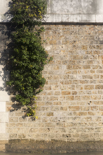 Architecture Brick Wall Building Exterior Built Structure Close-up Day Growth Ivy Nature No People Outdoors Plant Tree Wall - Building Feature