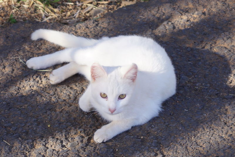 Close-up Feline Kitten Looking At Camera Mammal No People One Animal Outdoors White Color