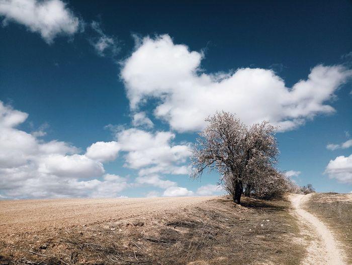 野游,西班牙小镇 西班牙 小镇 村庄 农 田 蓝 春晓 旅游 骑行 农场 树 云 好天气 Pixelated Cyberspace Technology Sand Internet Cloud - Sky