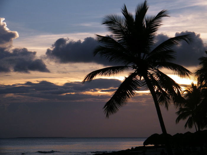 Paradise Paradise Beach Paradise On Earth Outdoors Nature Tree Palm Leaf Tropical Tree Coconut Palm Tree No People Idyllic Horizon Over Water Horizon Beach Silhouette Cloud - Sky Tranquility Tranquil Scene Beauty In Nature Scenics - Nature Sunset Water Sky Sea Tropical Climate Palm Tree Sunset Silhouettes Sunset #sun #clouds #skylovers #sky #nature #beautifulinnature #naturalbeauty #photography #landscape