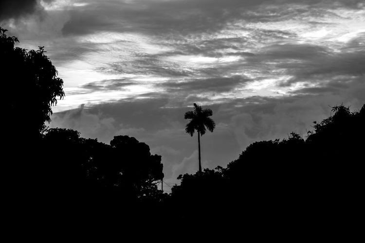 Beauty In Nature Black & White Black And White Blackandwhite Blackandwhite Photography Cloud - Sky Day Growth Lightning Low Angle View Nature No People Outdoors Palm Tree Scenics Silhouette Sky Storm Cloud Sunset Tree EyeEmNewHere