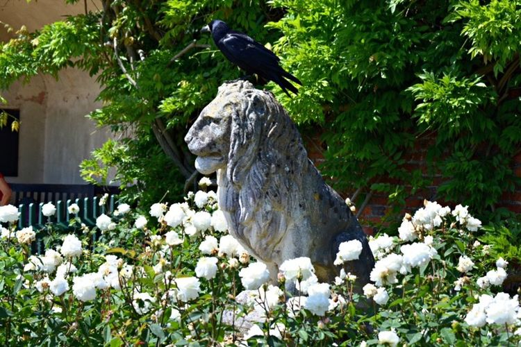 Lion Statue Photo Crow