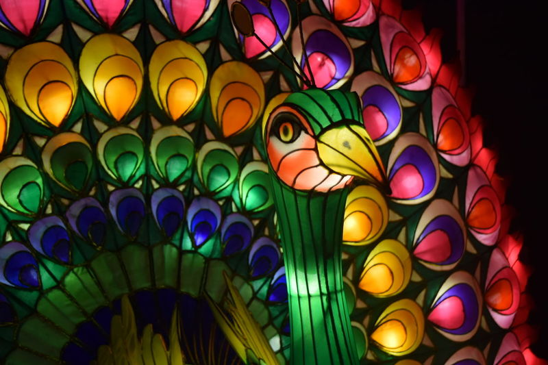 Chinese Lantern Chinese Lanterns Dandenong  Melbourne Australia Colorful Multi Colored Illuminated Circle Variation Vibrant Color Fairy Lights Traditional Festival Time Night Photography Celebration Peacock Colors Peacock Peacock Feathers Peacock Art Culture Lantern Light Electric Light Outdoors