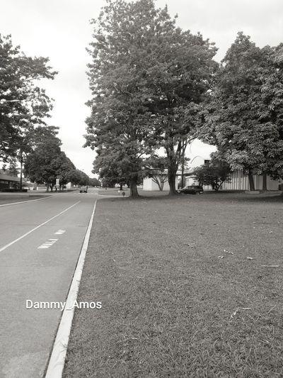 In black and white Summer Road Tripping Tree Road Asphalt Street Sky Road Marking Bicycle Lane