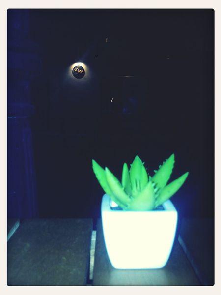 Noche Oveja veraniega...