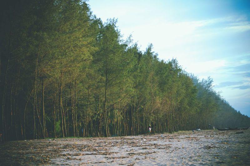 Beach Beachphotography Trees Nikonphotography Nikon Nikon D3200 Cherai Beach Evening Walk First Eyeem Photo