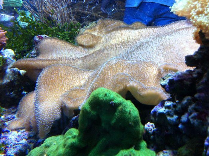 Sealife