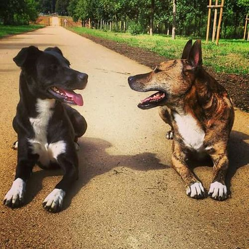 Arkos Lana Chiens Chien Dog I Love My Dog Enjoying Life