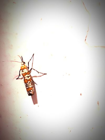 Insect Full