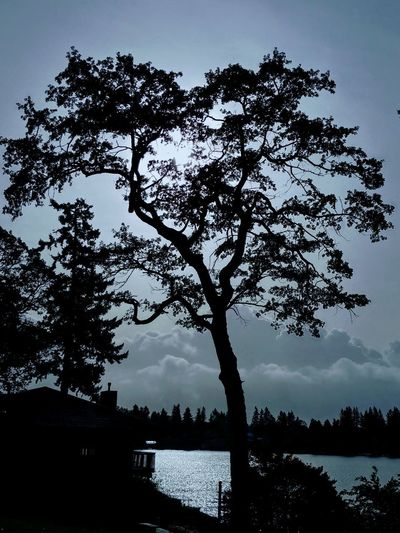 See the Light EyeEmNewHere Tree Water Lake Reflection Silhouette Sky Landscape Beauty In Nature Scenics Tranquility