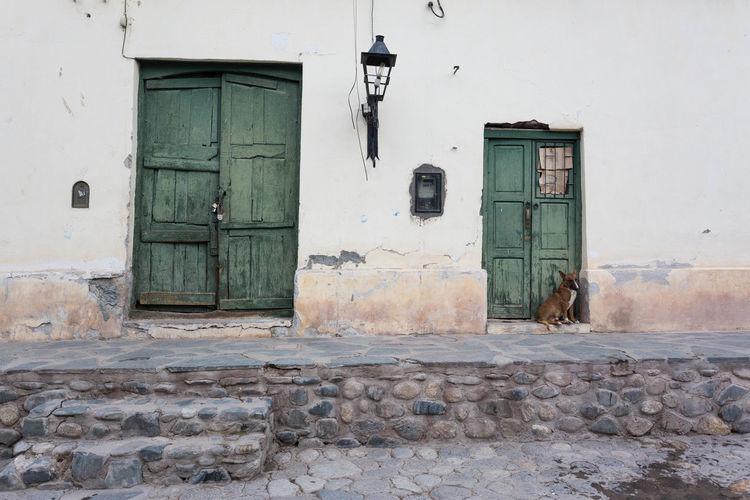 Cachi Dog Doors
