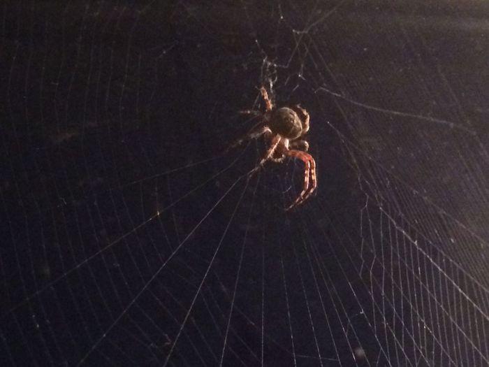 Spider Spiderweb Creepy Nature Wildlife Freaky