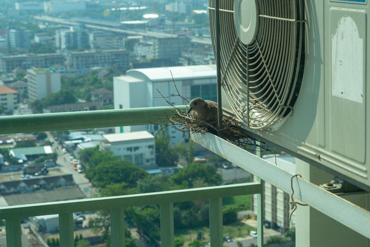 Selective focus on a bird sitting on the nest for hatching its eggs on the steel cage of condominium balcony Animal Themes Poultry Condominium Bird Nest City Air Conditioner Balcony Architecture Bird Nature Outdoors Metal Hatching Lifestyles Built Structure Sunrise Sunlight Sky