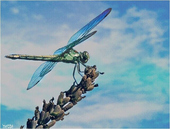 Dragonfly Nature Bluehues Color Palette