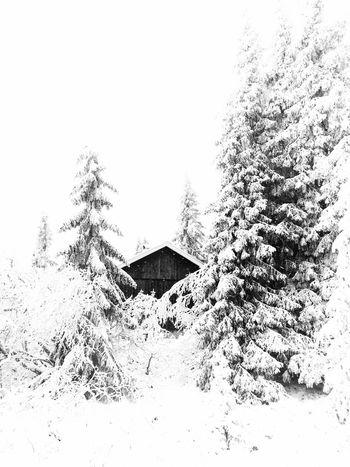 Hideaway ❄️❄️❄️💁 Blackandwhite Fortheloveofblackandwhite Tadaa Community Vackra Dalarna EyeEm Best Shots It's Cold Outside