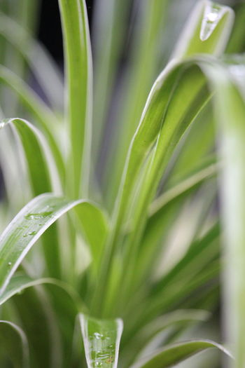 Close-up of fresh green plant in field