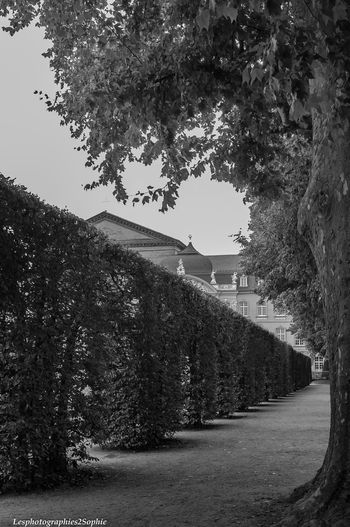 Allemagne Trier Trier City Architecture Beauty In Nature Blackandwhite Building Exterior Built Structure Clear Sky Day Europe Germany Nature No People Noiretblanc Outdoors Palace Palais Sky Tree