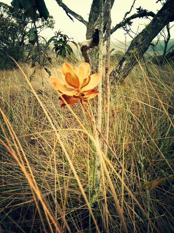 Orangeflower Belezanatural Photography Colors Nature_collection Ibitipoca Brazil Green Traveling Observation