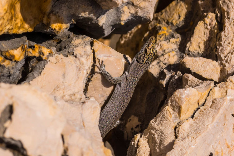 Backgrounds Beauty In Nature Close-up Day Full Frame Lizard Lizard Between Rocks Nature No People Outdoors Rock - Object Rocks Summer Textured  EyeEmNewHere
